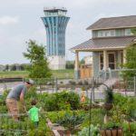Mueller Austin Community Garden Flowers at Full Bloom
